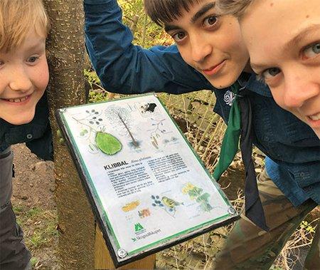 Torns scoutkår får kunskap om träd genom Skogen i Skolans skyltar